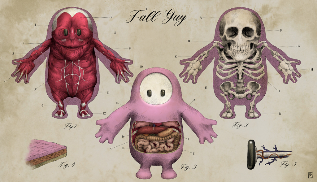 Ever wondered what's inside a Fall Guy? Anatomical fanart reveals the horrible truth